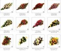 Flower Broshure